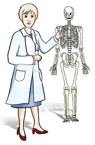 zeus-scheletro